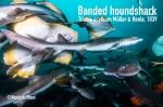 Banded houndshark (Triakis scyllium)